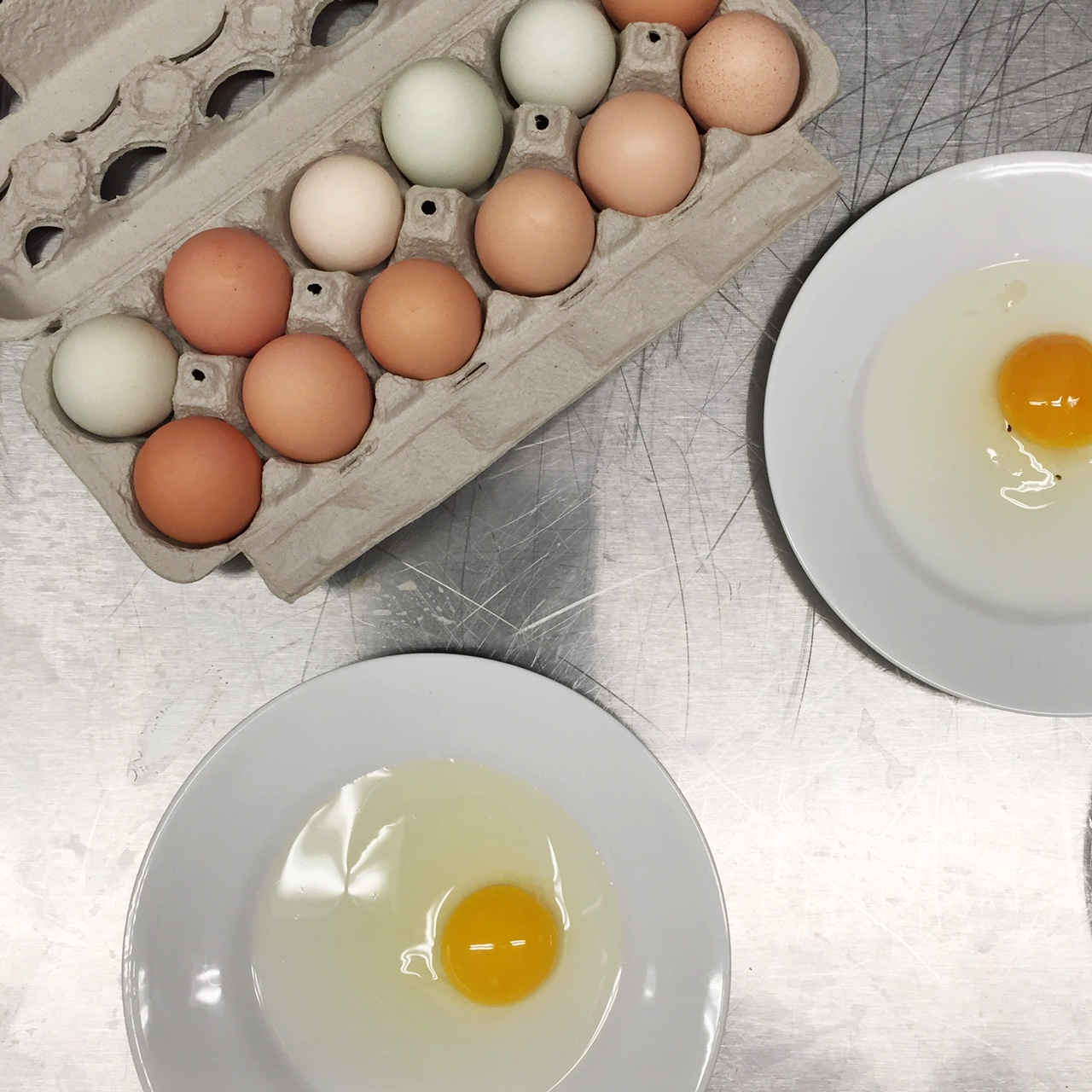farm fresh vs grocery store egg